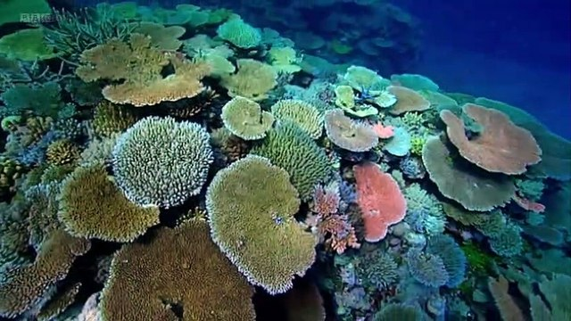 BBC Natures Microworlds 08of13 Great Barrier Reef