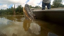 Swamp People: Willie is a One-Man Gator Master