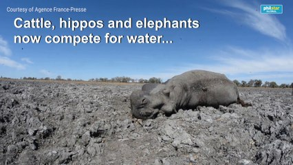 Animals face drought in Botswana's Okavango