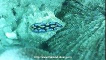 Koh tao lighthouse, corail et barracuda, nudibranches, poissons-clowns avec Thailand Diving Pattaya