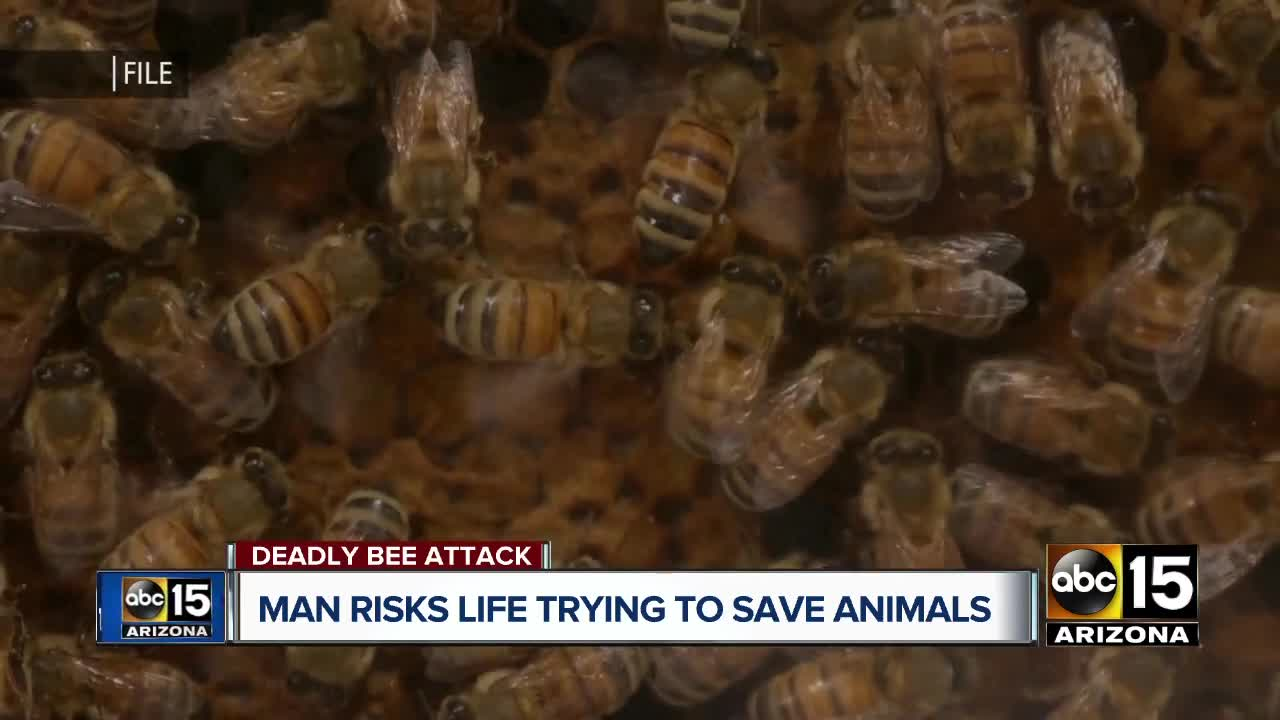San Tan Valley man recalls scary moments trying to save dogs from swarm of bees