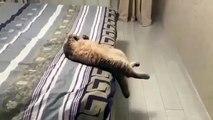 C'est le week-end; ce chat qui se relaxe sur le lit de son maître est la vidéo la plus mignonne que vous verrez aujourd'hui