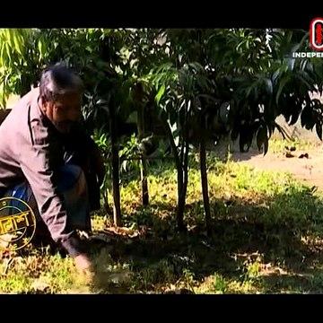 Talaash Episode 136 - তালাশ পর্ব- ১৩৬ - মুক্তিযোদ্ধা ২০১৯ - প্রথম পর্ব - Muktijoddha 2019