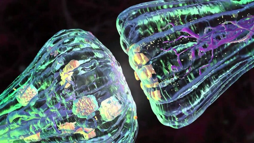 Nuevo antipsicótico para el tratamiento de la esquizofrenia con un mecanismo de acción único