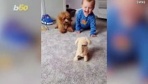 Adorable Video Shows Baby Boy Driving His Dog Crazy With Barking Dog Toy