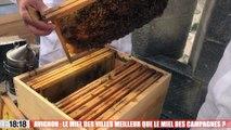 Avignon : le miel des villes meilleur que le miel des campagnes ?