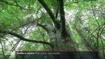 Environnement  : Des forêts à vendre pour préserver la planète