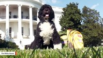 White House Was Once Home To A Pet Alligator