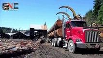 World Dangerous Monster Truck Fastest Extreme Processing, Heavy biggest Truck Logging Skill(1)