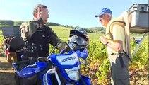 Face aux voleurs de raisin, la gendarmerie patrouille dans les vignes de Bourgogne