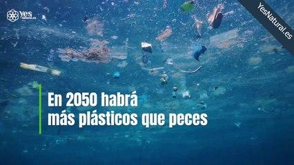 En el año 2050 la cantidad de plásticos superará a la de los peces