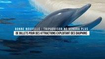 TripAdvisor ne vendra plus de billets pour des attractions exploitant des dauphins