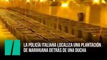La policía italiana localiza una plantación de marihuana detrás de una ducha