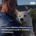 Des chiens détenus illégalement saisis dans un élevage sauvage à Gréolières