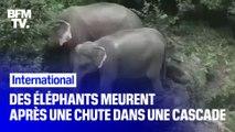Six éléphants et un veau sont morts après être tombés dans une cascade en Thaïlande