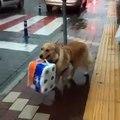 Çanakkale'de poşet taşımaya yardım eden köpek gündem oldu