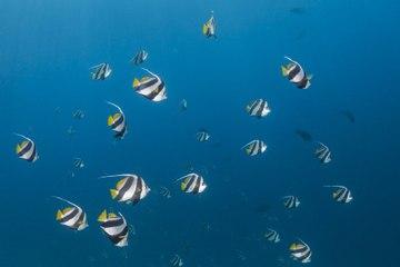 Peces marinos: todo lo que debes saber
