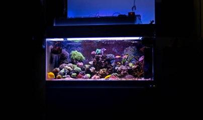 La fundamental tarea de las bacterias en los acuarios