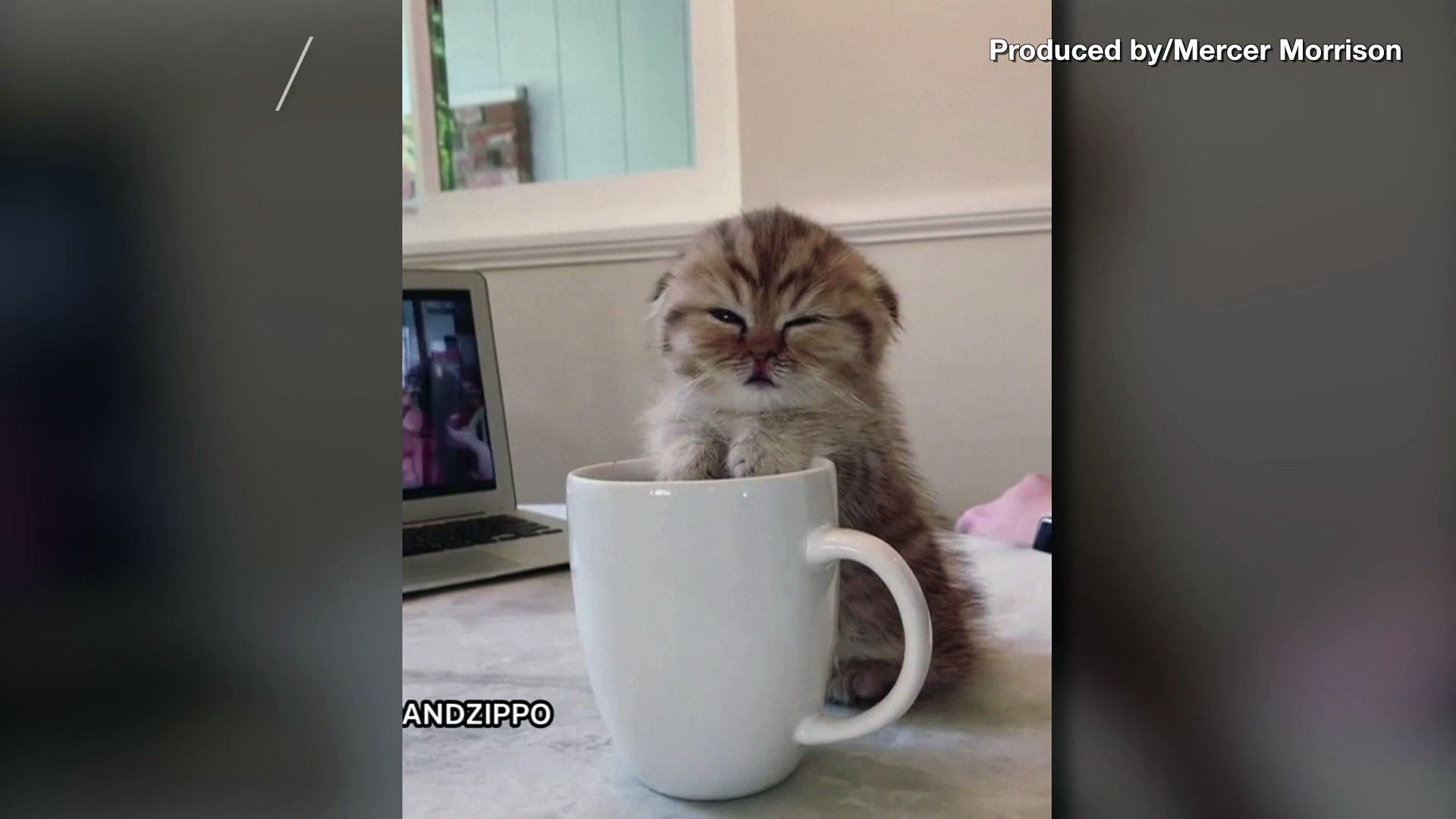 What's New, Sleepy Cat? Footage Shows Cute Kitty Perched on Coffee Mug About to Fall Asleep!