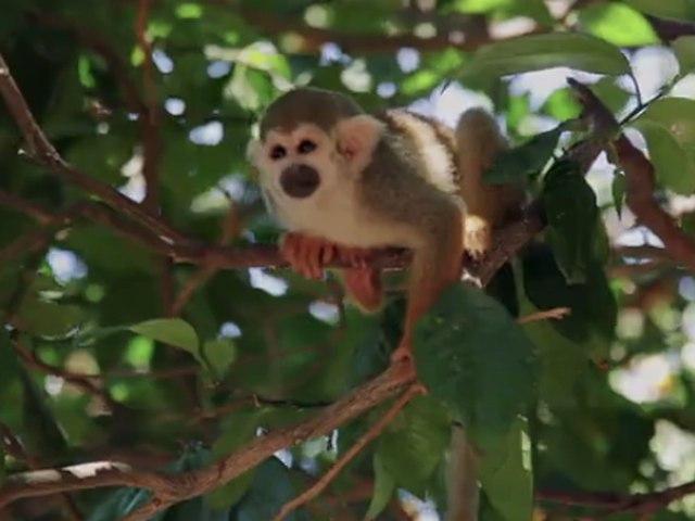 WWF schlägt Alarm: Tierbestände sinken drastisch!