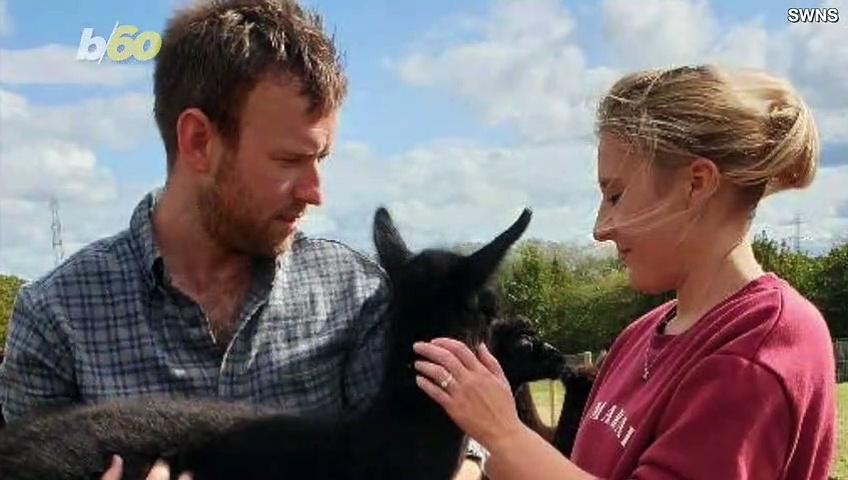 This Couple Is Trying to Make Alpacas Support Animals