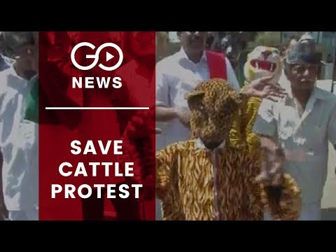 Cattle Owners Protest Leopard Attacks