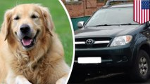Woman accidentally shot in the thigh by labrador retriever