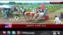 Bull Cart  Race In Bagalkote On The Occasion Of Vijayadashmi