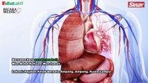 'Bantulah mudahkan penderma organ' - Hafizam