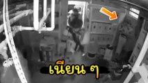 ความเนียนคือปีศาจ.. ผู้ร้ายหนีตำรวจเข้าห้องเก็บของ เขาจะถูกจับมั้ยให้ทาย !?