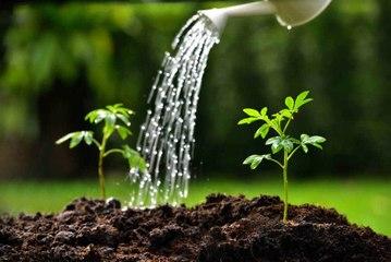 Tipps für eine gute Bewässerung