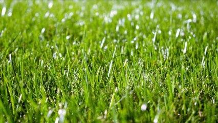 Wie wird Rasen angelegt?