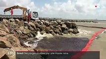 Brésil : plus d'une centaine de plages souillées par une marée noire