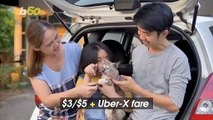 Uber Launches 'UberPets', So Your Pet Can Ride, Too!