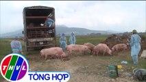 THVL   Nguy cơ dịch tả heo châu Phi bùng phát trở lại ở Nghệ An và Hà Tĩnh