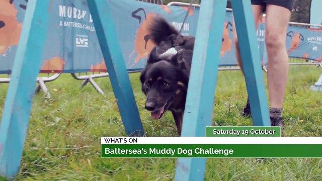 Muddy Dog Challenge + Into Film Festival 2019!