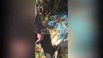 Report TV -Qese të mbushura me pula të ngordhura nga Fieri, si po ndotet lumi Buna
