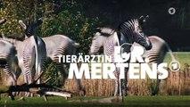 Tierärztin Dr  Mertens (69) Staffel 6 Folge 4 - Ausklang
