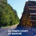 La forêt française en crise