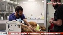 Le 18:18 - Comment éviter la parvovirose, ce virus mortel qui a frappé de nombreux chiens en Provence