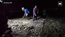 Fish kill at Las Piñas-Parañaque Wetland Park