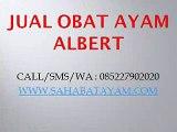 WA O85-227-9O2O2O Terjamin Importir Obat Kurap Tradisional Untuk Ayam Bangkok Bekasi