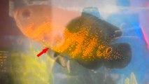 मछली पर लिखा है 'अल्लाह', खरीदने के लिए लगी 5 लाख रुपए कीमत