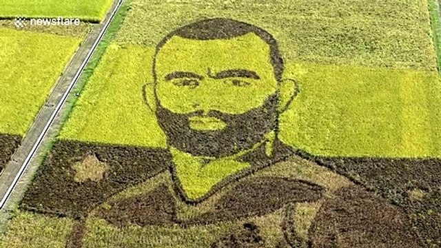 Rice farmers in Japan turn paddies into incredible Rugby World Cup displays