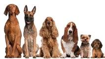 Votre race de chien préférée en dit long sur vous….
