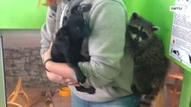 Raccoon and puppy became BFFs at Irkutsk zoo