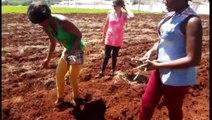 Imigrantes haitianos iniciam cultivo de horta do Programa Agricultura Urbana