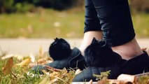 How to Make Cat Pom-Poms for Your Sneakers