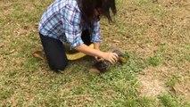 Une femme se jette sur un énorme serpent pour le capturer