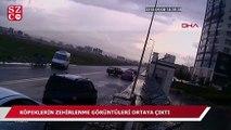 Ankara'da 16 köpeğin zehirlenerek öldürülmesinin görüntüleri ortaya çıktı